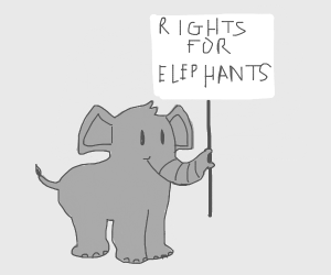 Baby elephant happy at protest