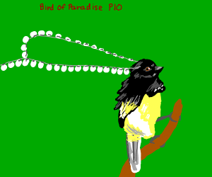 Bird of paradise pio (so beautiful!)