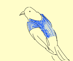 Hawk wearing a T-Shirt