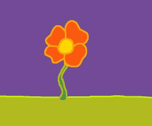Four-petaled flower