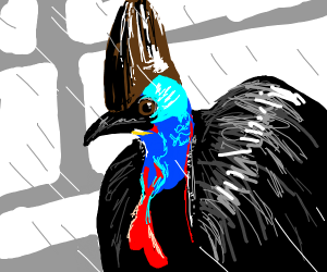 really good picture of an cassowary