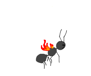 Ant on fire