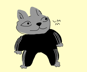 kitten in a track suit