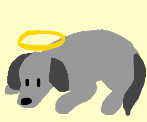 dog laying down with a halo