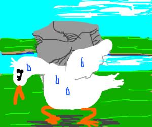 Duck carries heavy rock.