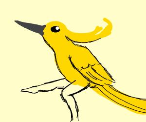yelow bird
