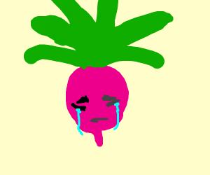 Crying radish