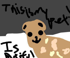Draw your pet.