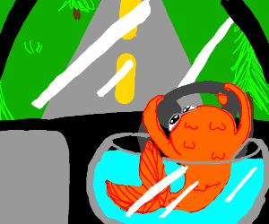 Goldfish Driving