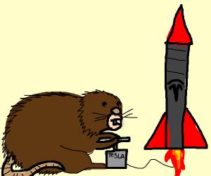 Elon Muskrat