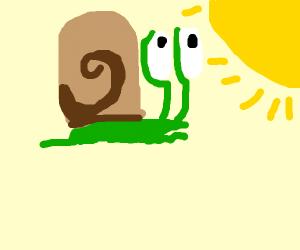 snail bob looking at the sun