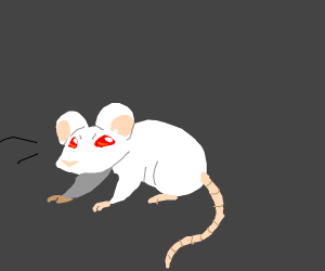 a white mouse (it looks really good)