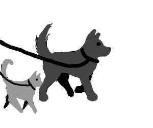 Dogs and cats being walked on a leash