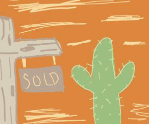 cactus homes neighborhood