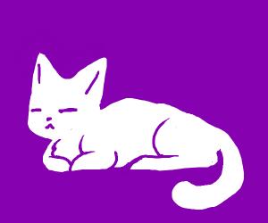 Cute kitten Resting