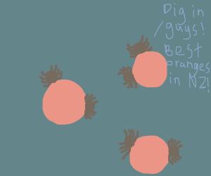 spiders eating oranges