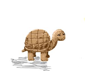 Tortoise looks very concerned