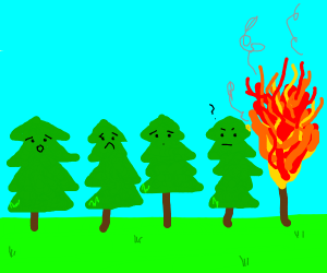 forest burns to death