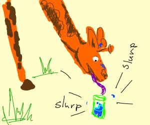 Giraffe drinking out of a green drink bottle