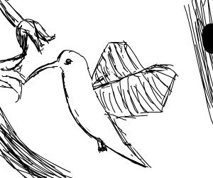 Black & White hummingbird