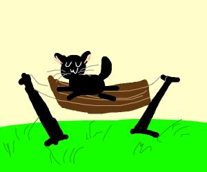 Kitty in a Hammock