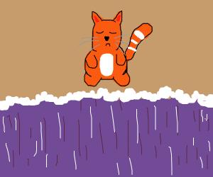 big cat hates the beach