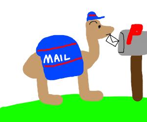 Camel Mailman