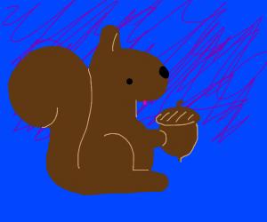 squirll picks up nut
