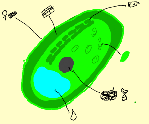 A fancy plant cell