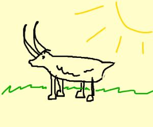 goa-yak