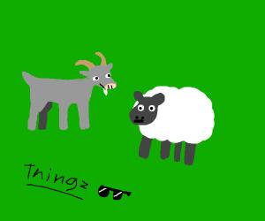 Goat sheep things