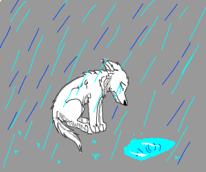 A sad dog crying in the rain. ;-;