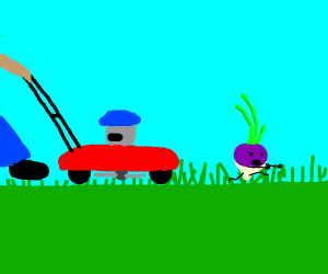Turnip about to get run over by lawnmower