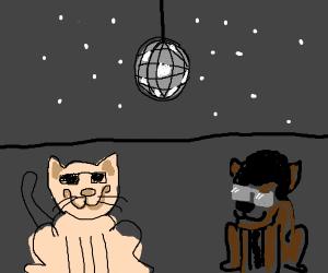 Pet Disco