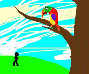 Parrot awww mann
