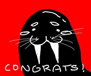 Congratulations walrus
