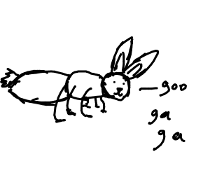 ant bunny is born