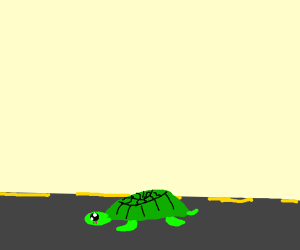Turtle walking along the street