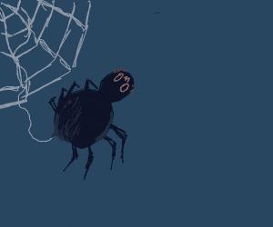 OwO spider