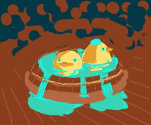 2 ducks in bucket full of water