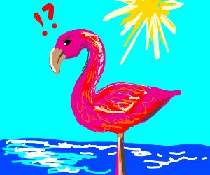 concerned flamingo