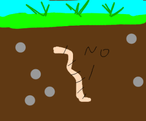 Worm says NO