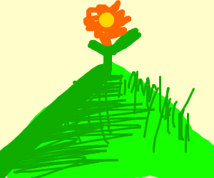 flower on a grassy mountain