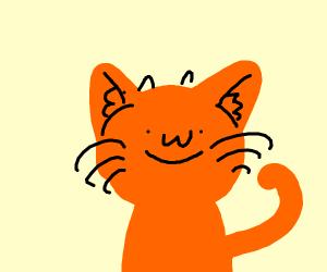 :3 face cat