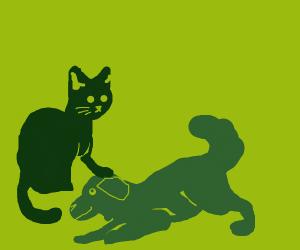 Cats pattin' doges