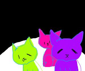 Magic cats