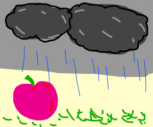 Pink apple during rainy grey day