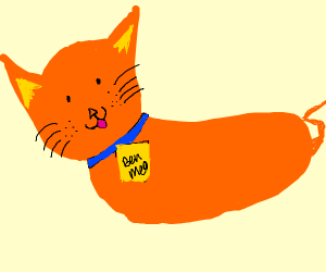 An orange cat called Ben Meo