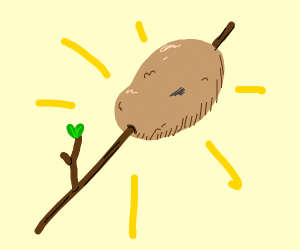 Potato on a stick.