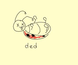 A dead ladybug